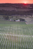 Australia  Clare Valley  Clare  Elevated View of Vineyards