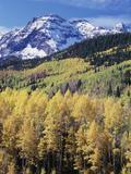 Colorado  Rocky Mts  Aspen Trees Below a Mountain Peak in Fall