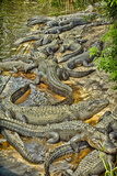 Aligators, Alligator Farm Zoological Park, St. Augustine, Florida Papier Photo par Rona Schwarz