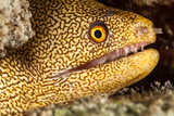 Night Dive Photograph of Goldentail Eel Off Bonaire