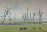 Australia  Victoria  Huon  Lake Hume with Forest Fire Smoke