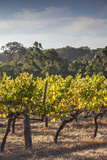 Southwest Australia  Margaret River Wine Region  Vineyard