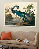 Louisiana Heron Plate 217 Toile Murale Géante par Porter Design