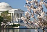 Spring in Washington DC - Cherry Blossom Festival at Jefferson Memorial