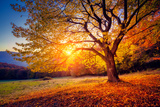 Majestic Alone Beech Tree on a Hill Slope with Sunny Beams at Mountain Valley Dramatic Colorful Mo