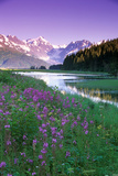 Fireweed in Bloom Along Pond with Chugach Mtns Sc Ak Summer