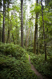 West Elwha Trail Starting at the Altaire Campground