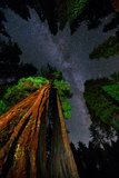 The Milky Way Above Towering Giant Sequoia Trees  Some of the Largest and Tallest Trees on Earth