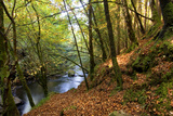 Fall Colors in Clare Glens Forest in Limerick  Ireland