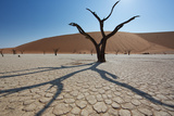 The Dead Acacia Trees of Deadvlei at Sunrise
