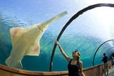 A Woman Points to a Carpenter Shark  or Sawfish  Swimming over an Underwater Tunnel