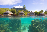 Giant Coral Heads Just Offshore of a Resort with Over-Water Bungalows