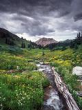Wildflowers and Stream Near Black Bear Pass  San Juan Mountains