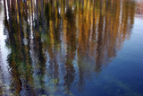 Colors of Fall Leaves are Reflected in the Surface of a Pond