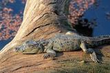 Baby Crocodile Papier Photo par AndamanSE