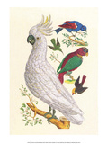 Cockatoo  Parrot  Blackbird & Hummingbird
