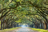 Savannah  Georgia  USA Oak Tree Lined Road at Historic Wormsloe Plantation