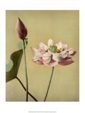 Lotus Flower  Vintage Japanese Photography