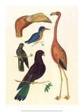 Flamingo  Pigeons  Doves & Kingfisher (1734-1765)