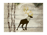 Woodland  Elk
