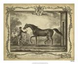 Distinguished Horses IV