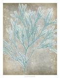 Spa Seaweed I