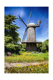 Dutch Windmill With Blooming Tulips
