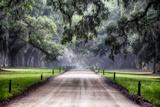 Plantation Road  Charleston  South Carolina