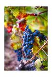Napa Valley Fruit