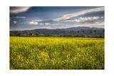 Napa Valley Spring Meadow  California