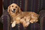 Dog and Cat Sitting in a Chair