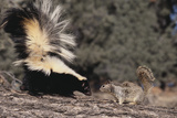 Striped Skunk and Squirrel