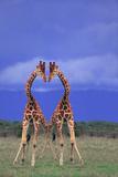 Symmetrical Giraffes Tableau sur toile par DLILLC