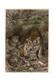 Tiger by Alfred Edmund Brehm