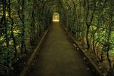 Tunnel of Shrub II