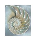 Nautilus in Blue II Giclée par Caroline Kelly