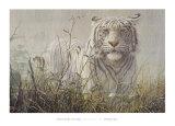 Monsoon- White Tiger (detail) Reproduction d'art par John Seerey-Lester