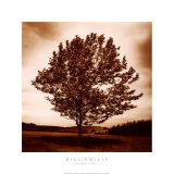 Meadow Land II