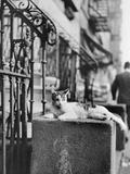 Cat Sitting Atop City Stoop