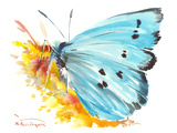 Holly Blue Butterfly 2