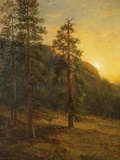 California Redwoods  1872
