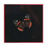 Red Admiral Butterfly  2001
