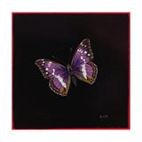 Purple Emperor Butterfly  2000