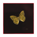 Silver Washed Fritillary Butterfly  2000