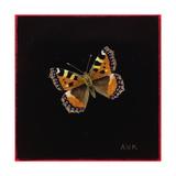 Small Tortoiseshell Butterfly  1998