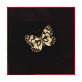 Marbled White Butterfly  2000