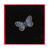 Large Blue Butterfly  2000
