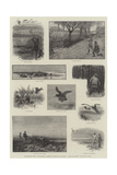Illustrations from The Badminton Library of Sports and Pastimes  Moor and Marsh  Field and Covert