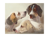 A Study of Hounds