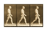 Image Sequence of a Nude Man Walking  'Animal Locomotion' Series  C1881